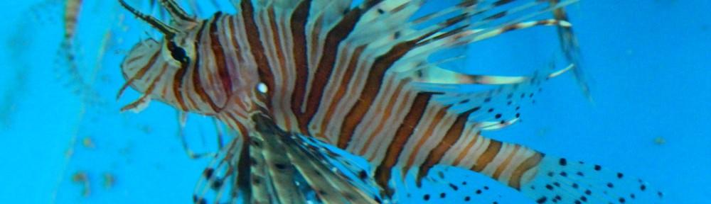 Lionfish -  HEADER